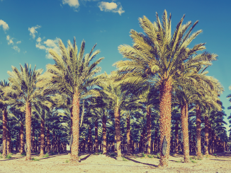 Morocco Gets Legal Cannabis Sector