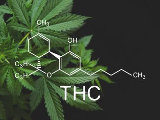 How Does Delta-8 THC Affect The Endocannabinoid System